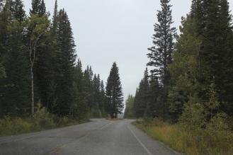bow trail2
